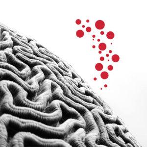 Neurodidáctica: la evolución del aprendizaje